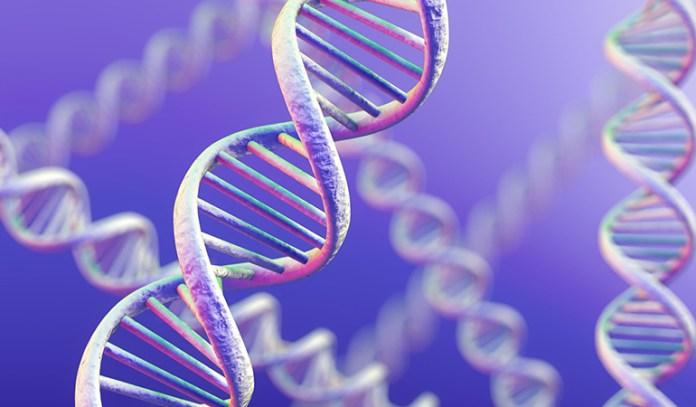 Cat's Claw Enhances DNA Repair