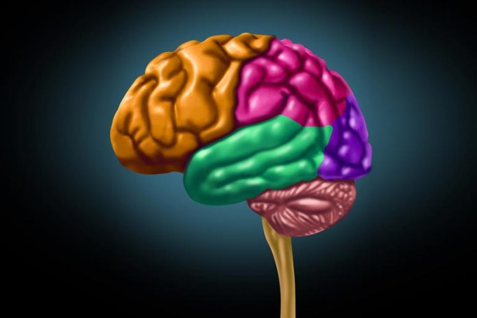 Effects Of Depression On The Brain: Hippocampus