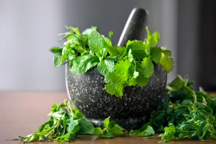 Herb Parsley Makes Easy To Recover From Anemia