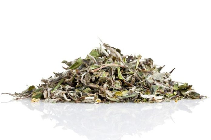 White Tea Extracts Can Prevent Sun Damage