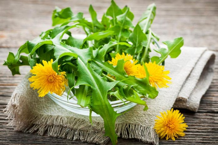 Dandelion is an effective treatment for anemia