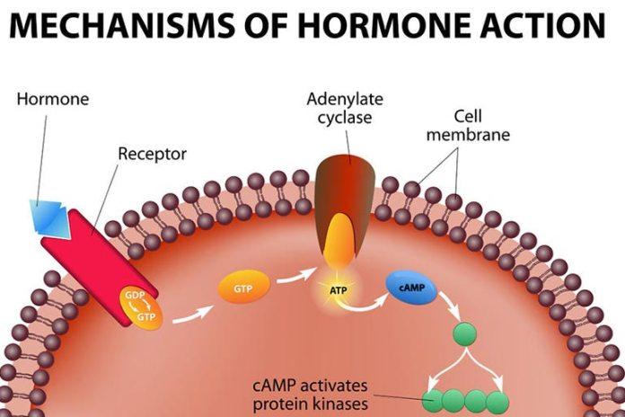 Vaginal Tightening Creams Cause Hormone Disruption
