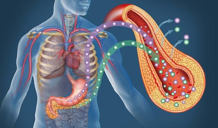 macadamia nut oil improves insulin resistance
