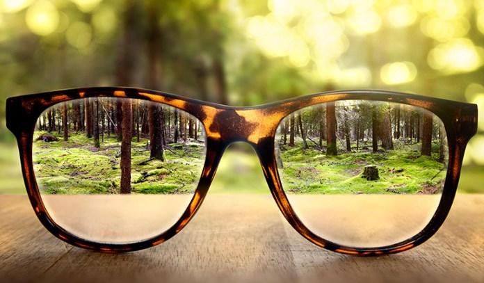 Bilberries improve eyesight and prevent myopia