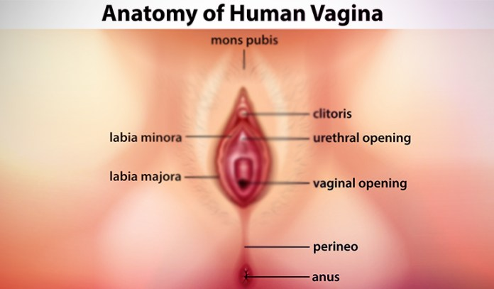 The Vulva Is Made Up Of Many Sensitive Parts