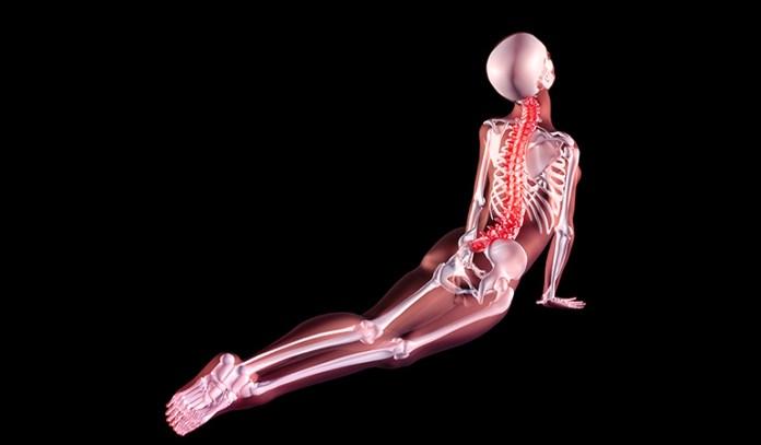 2-make-sure-the-program-teaches-anatomy