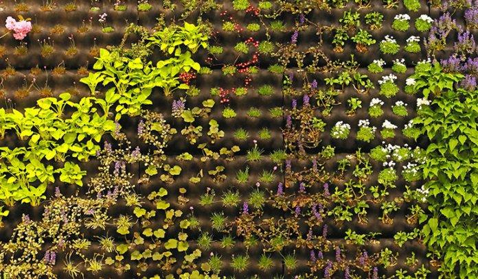 Aromatic Plants For Vertical Garden