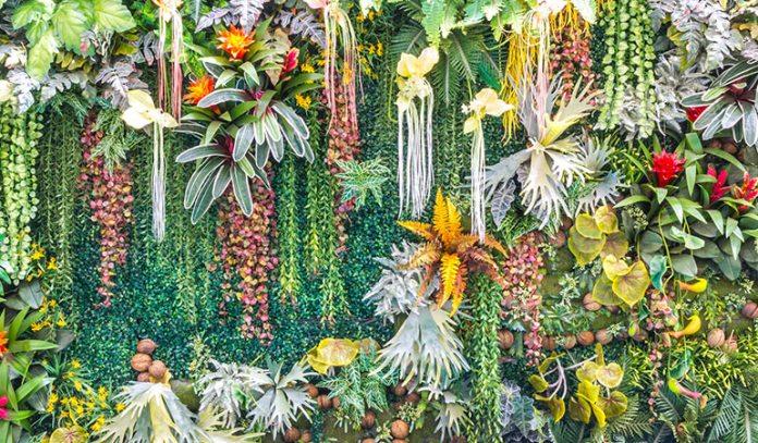 Decorative Plants Suitable For Vertical Gardening
