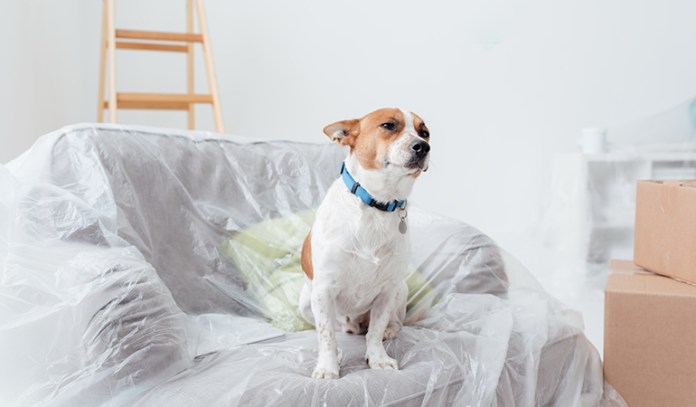 Bringing some of the old stuff to the new home will help to get your dog more used to the new environment.