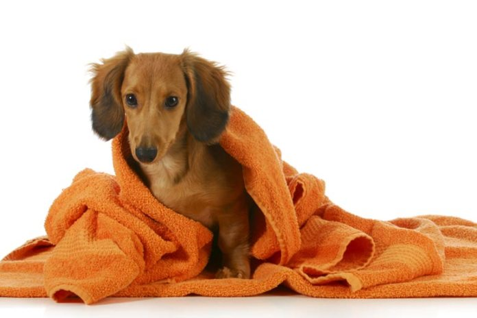 You Can Use Baking Soda As A Dry Shampoo On Your Dog
