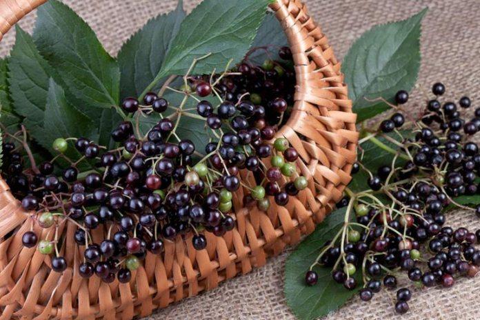 Food That Seem Healthy But Are Not: Elderberries