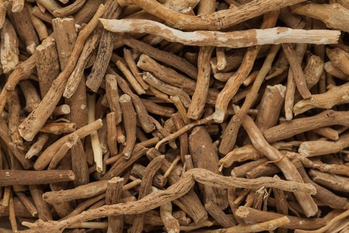 Ashwagandha Improves Male Sexual Dysfunction And Increases Testosterone