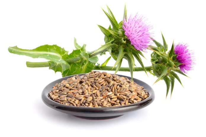 Milk Thistle Can Help Protect The Liver