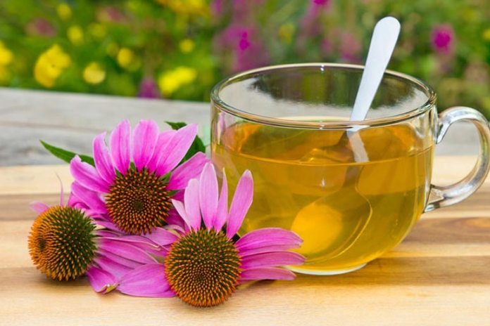 echinacea boosts immunity and fights viruses