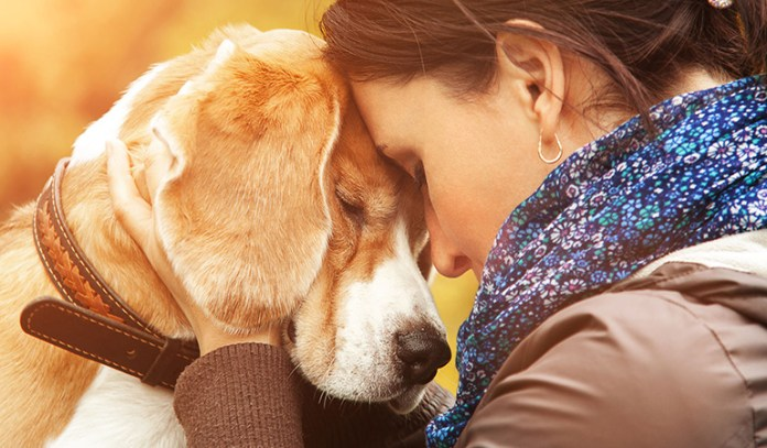 Dog owners experience less stress, anxiety and depression.