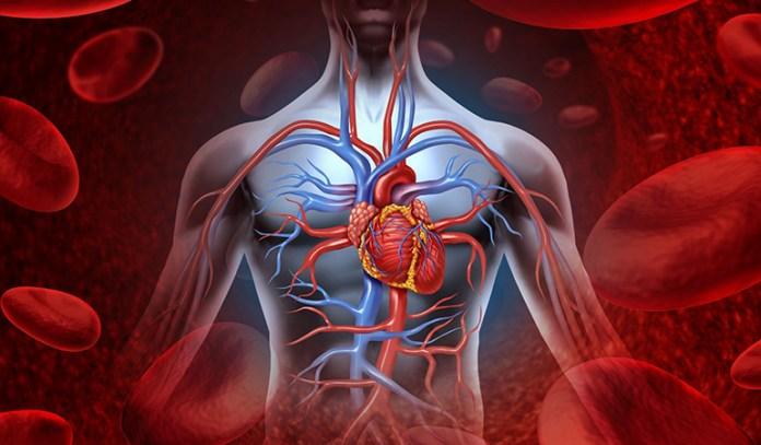 The Bridge Pose Benefits: Increases Blood Circulation