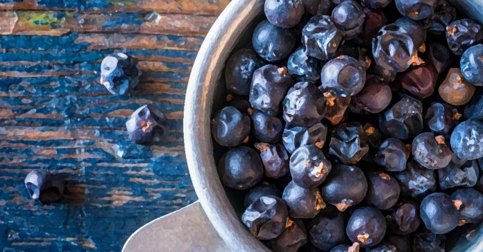 Juniper berries are a form of spice that can give you multiple health benefits