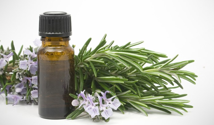 Rosemary essential oil is commonly used in aromatherapy for alopecia areata.
