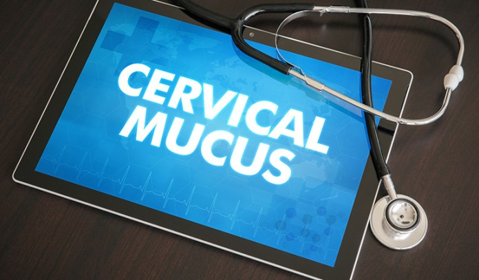 Check Cervical Mucus For Birth Control