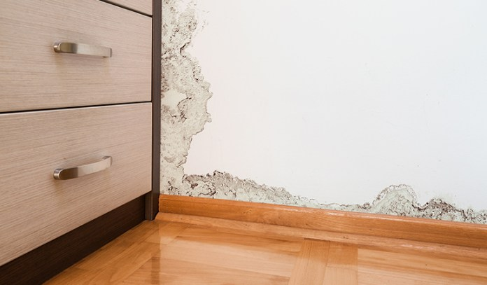 Peeling Of Wall Is A Sign Of Mold Growth
