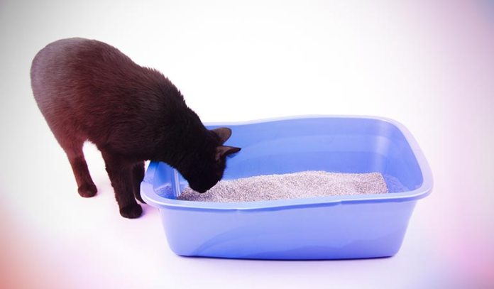 Try different kinds of litters