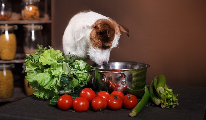 Light food is advisable rather than heavy fatty foods and also giving a space for your pet helps it to relax on its own