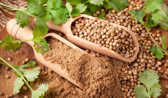 Coriander Seeds Aid In Bringing Down Blood Sugar And Bad Cholesterol Levels