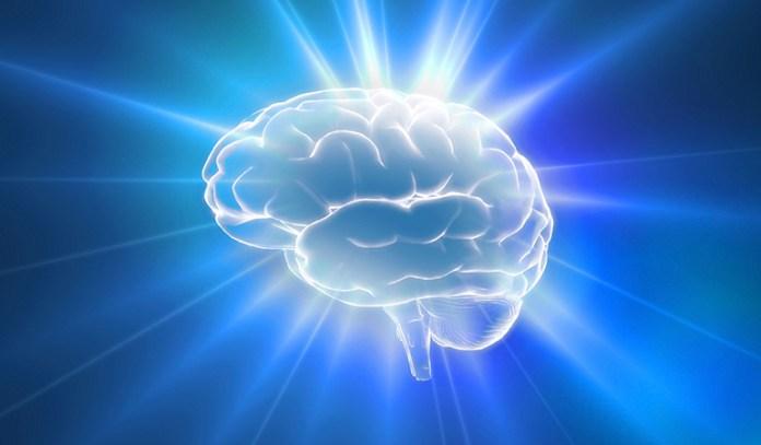 Curcumin In Turmeric Promotes Neuron Development, Preventing Age-Related Brain Disorders Like Alzheimer's