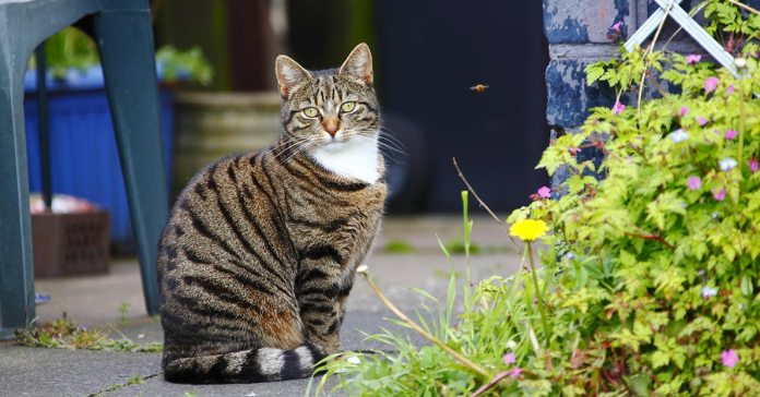 Keeping Your Outdoor Cat Saf
