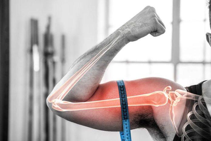 Falsa Can Build Bone Strength