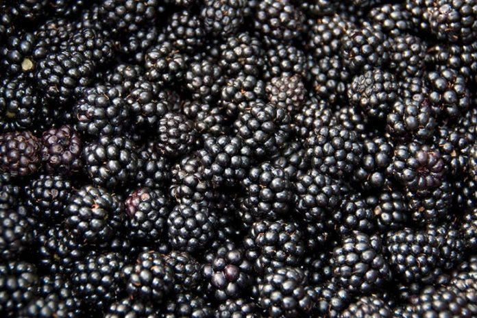 Each cup of blackberries is equivalent to half the day's recommended intake of vitamin C.