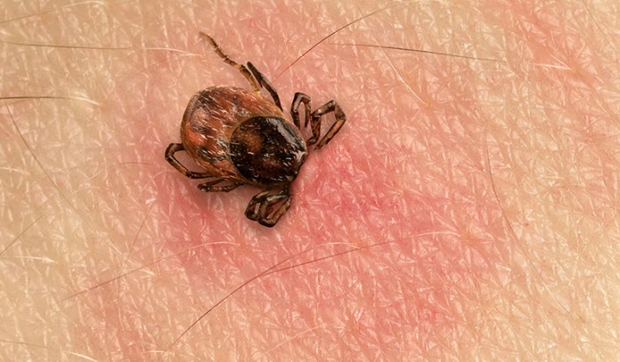 Cold Weather Helps Prevent Disease-Carrying Bugs