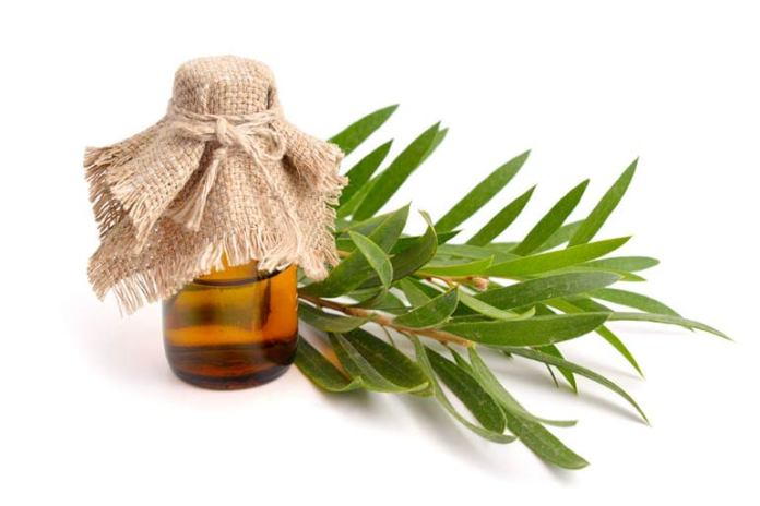 Tea tree oil is known to aid in ear infections