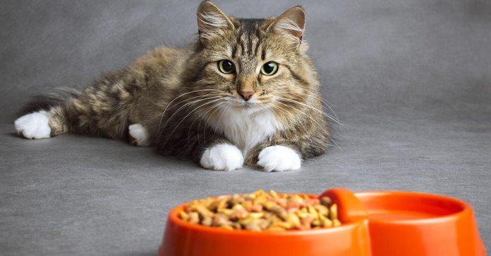 Common Cat-Feeding Mistakes