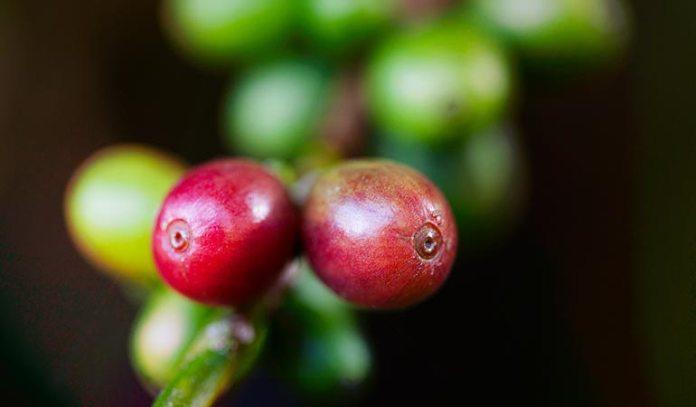coffee flour contains high potassium