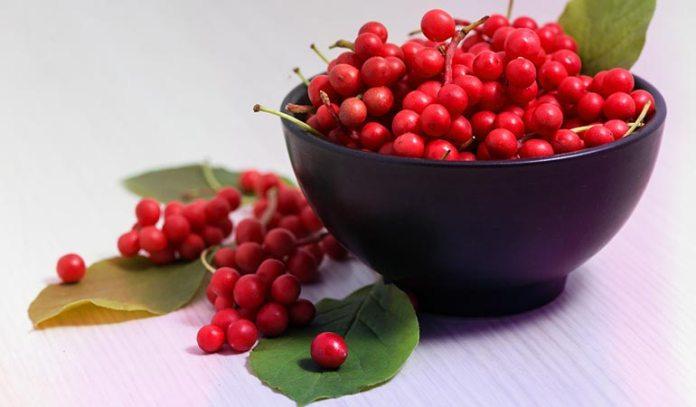Schizandra berry helps your resist fatigue)
