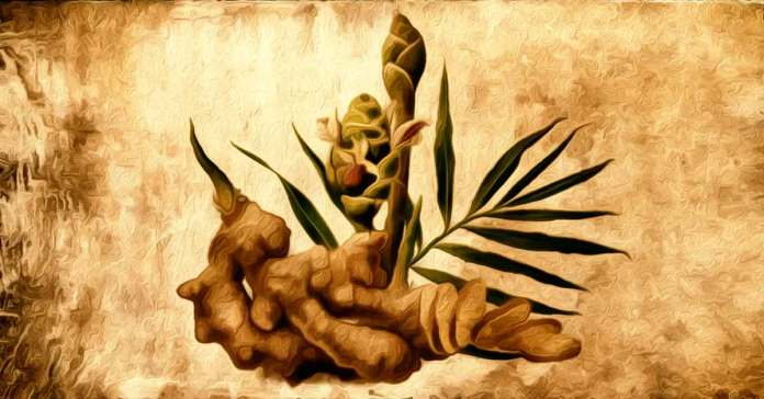 overall health benefits of ginger