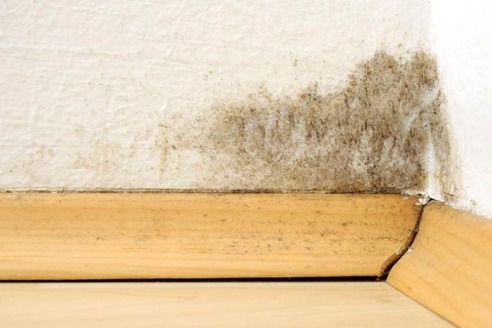 Mold can enter your airways and cause problems