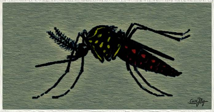 ways to prevent zika virus