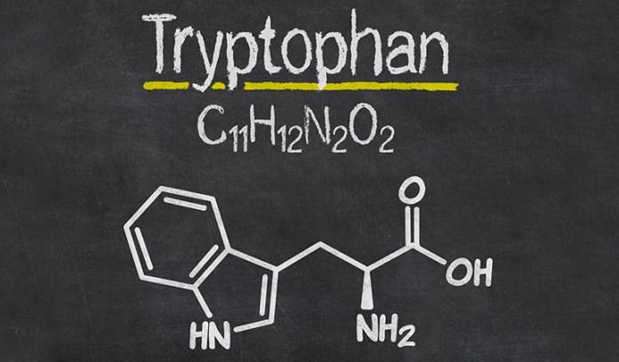 Tryptophan converts to serotonin