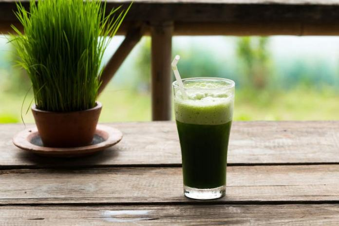Wheat grass juice is rich in vitamins and minerals and healthier than coffee