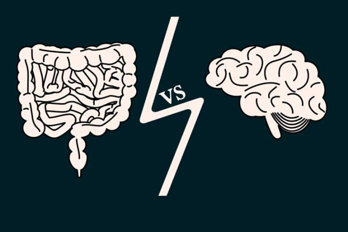 The brain and the digestive system are closely related