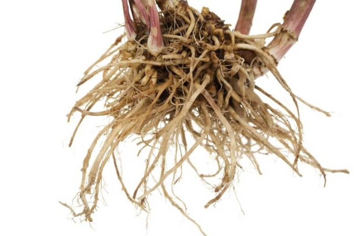 Valerian helps with nerve health