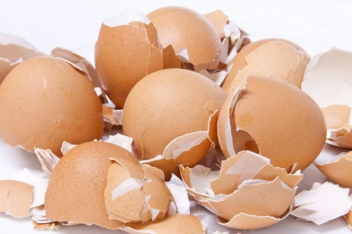 From cleaning your drains to being a great natural fertilizer option for your garden – egg shells come in very handy.