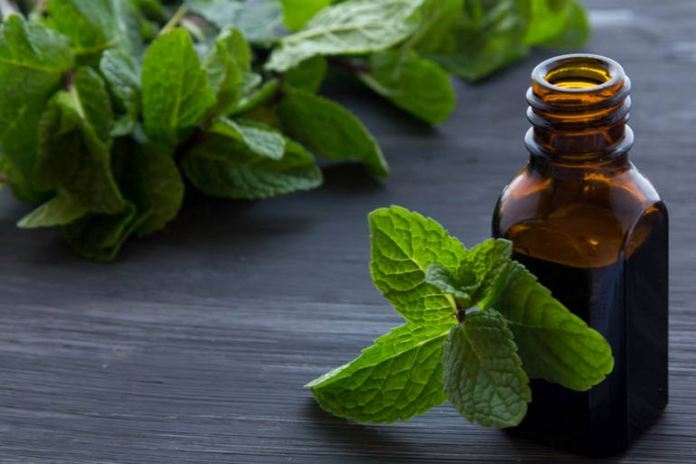 Peppermint oil can help repel mosquitoes