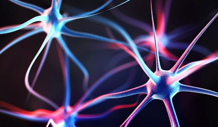 What actually changes are the strengths of the connections among the neurons working together at a particular momen