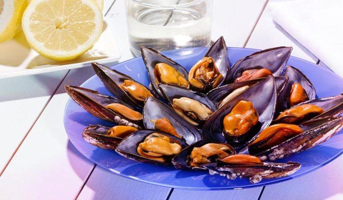 Shellfish Fish Mollusks