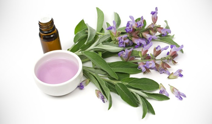 Clary sage is a boon for women and their overall health.