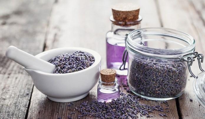 Lavender <!-- WP QUADS Content Ad Plugin v. 2.0.27 -- data-recalc-dims=