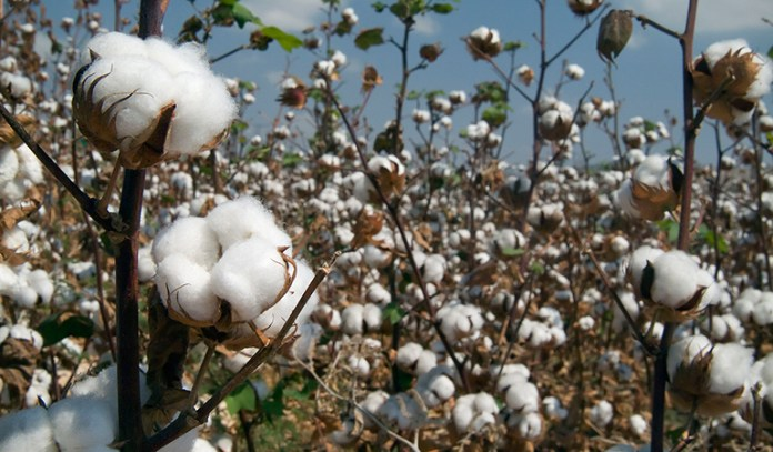 Choose products with organic cotton